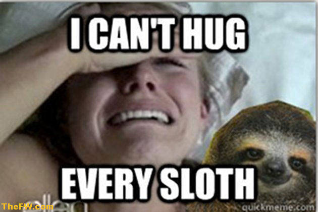 Sloth Memes Best Collection of Funny Sloth Pictures